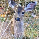 Acquittal in first trial in deer feeding murder case