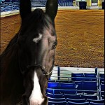 The Big Lick Celebration and Tennessee walker