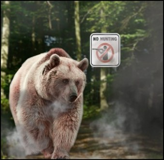 Grizzly bear in the wildfire