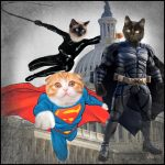 D.C. Cat Count confirms low feral cat population, lots of free-roaming pets