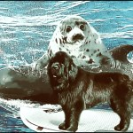 Pilot whale, harp seal, Newfoundland dog on surfboard