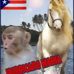 Hurricane Maria:  monkeys hold on,  horses endure