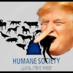 HSUS election picks are too few to stop the Trump juggernaut