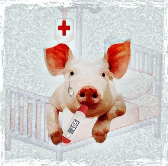 Hospital pig