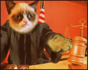 Judge cat by Beth Clifton