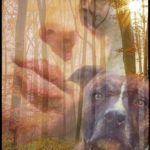 Pit bull or hunting hounds?  Who killed Elisa Pilarski & unborn child Enzo?
