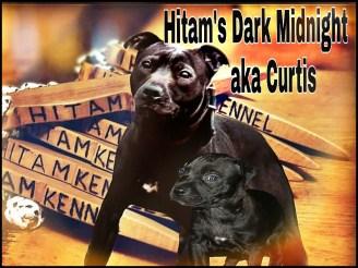 Hitam & Curtis