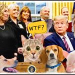 HSUS,  Donald Trump, & the PACT Act:  The Art of the Deal