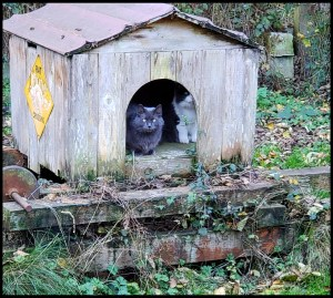 Cats in cat house