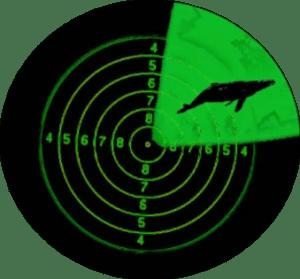 Sonar pings a whale