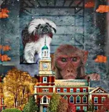 Harvard primate center