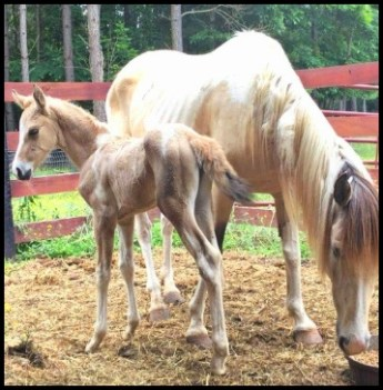 Foal and mare Sacred Way Sanctuary