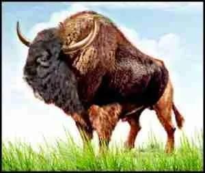Pleisticene age Steppe bison