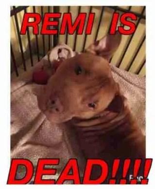 Remi is dead