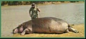 Theo De Merillac standing over dead hippo. (Facebook photo)