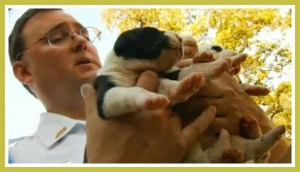 Mark Kumpf with pit bull puppies.