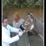 "New draft Egyptian constitution guarantees ""protection of animal welfare"""