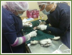 (ESAF spay/neuter clinic)