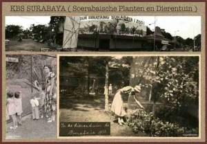 Surabaya Zoo circa 1918.