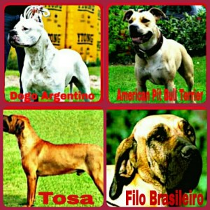 The Dangerous Dogs Act 1991 bans these breeds, but Staffordshire pit bulls were exempted in 1997.