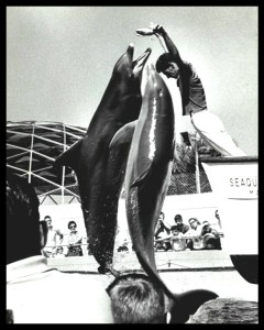 Ric O'Barry as Flipper trainer.