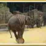 Zimbabwe sells wildlife to Chinese zoo empire