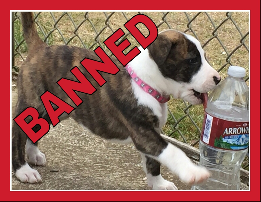 ban pit bulls Over 900 us cities have enacted breed-specific legislation (bsl) see our state-by-state listing of cities and counties with breed-specific pit bull laws.