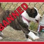 Montreal bans pit bulls