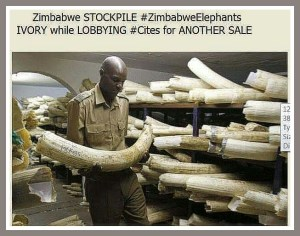 (Johnny Rodrigues/Zimbabwe Conservation Task Force)