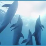 Ric O'Barry rips SeaWorld & HSUS execs for grandstanding on Taiji