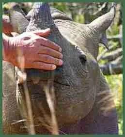 Tatenda. (Zimbabwe Conservation Task Force photo)
