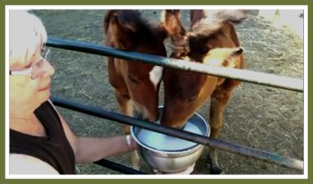 Karen Sussman feeding foal. (ISPMB photo)