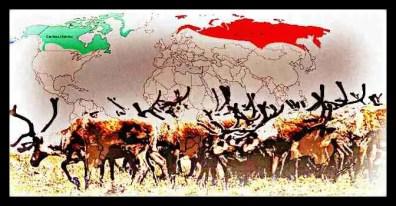 Reindeer range map