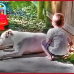 Dog attack deaths & maimings, U.S. & Canada,  1982-2016