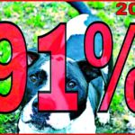 91% of dog attack disfigurement victims in 2016 were mauled by pit bulls