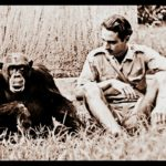 Primatologist Geza Teleki,  77