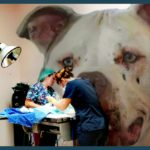 Purging the pit bull cancer from the heart & soul of animal advocacy