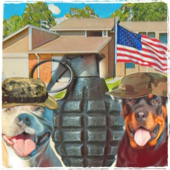 Pit bull and Rottweiler in military housing