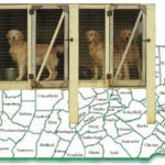 """No wire floors,""  Pennsylvania appellate court tells dog breeders"