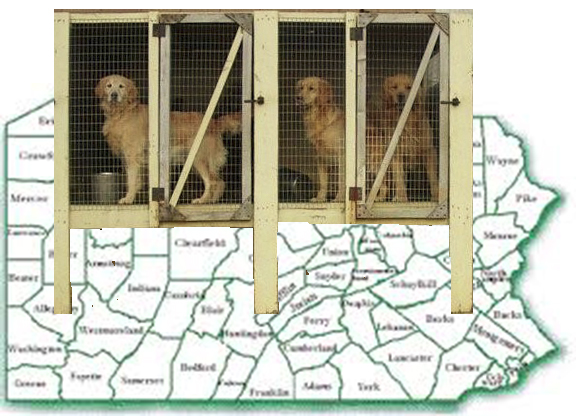 """No wire floors,"""" Pennsylvania appellate court tells dog"""