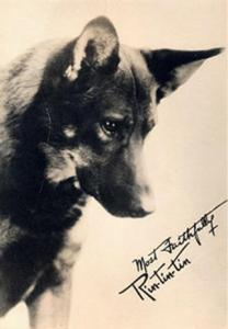 Rin Tin Tin inspired Diana Belais to form the Legion of Hero Dogs.