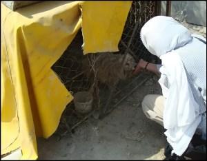 Tehran woman feeding a recently rescued dog.
