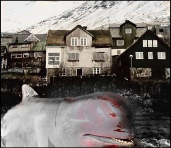 Faroe Island with dead pilot whale
