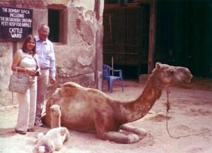 Fizzah Shah camel