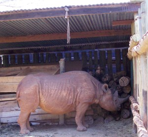 This old rhino is safe at the David Sheldrick Trust wildlife orphanage at Nairobi National Park. (MC)