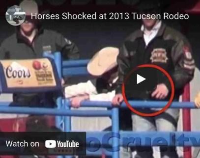 Tucson Rodeo 2013