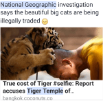 "Is Thai ""Tiger Temple"" trafficking?"