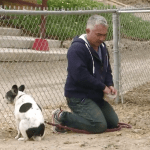 """Will Cesar Millan be charged for """"hog-dog rodeo""""?"""
