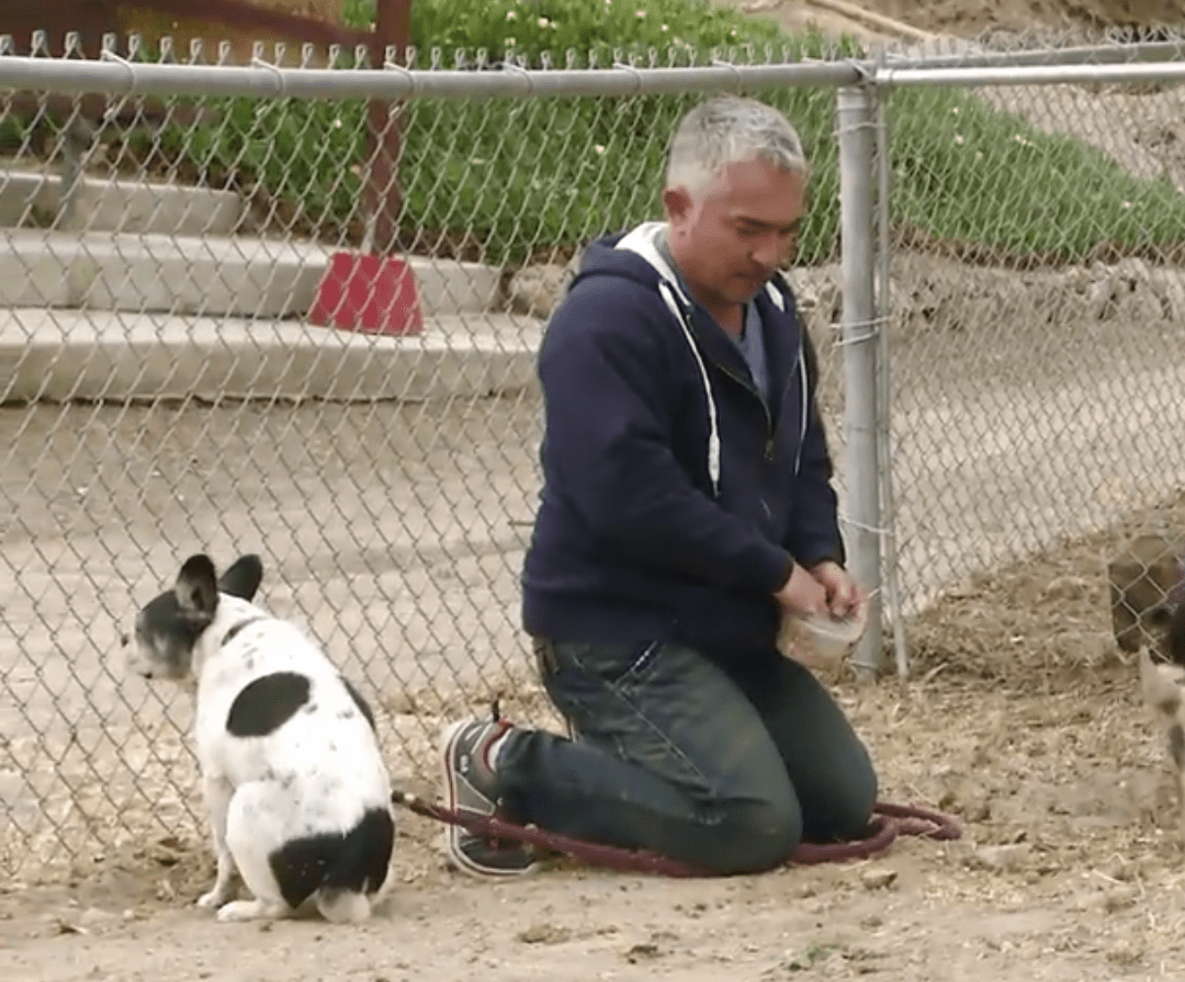"""Will Cesar Millan be charged for """"hog-dog rodeo""""? – Animals 24-7"""