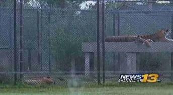 News 13 view of Serenity Springs Wildlife Center.